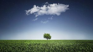 Devenez responsable environnement pour jouir d'une activité passionnante
