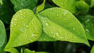 Quels sont les avantages du jardinage écologique ?